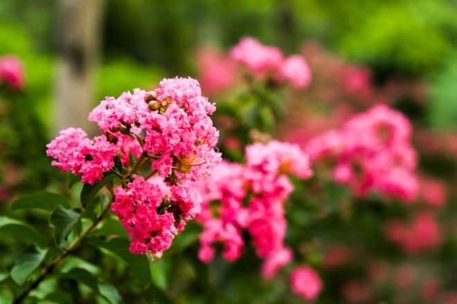 vườn hoa, khuôn viên, đại học Lâm nghiệp