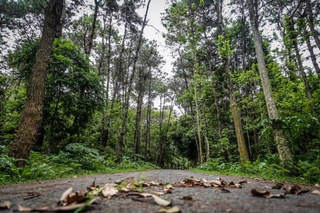 khu rừng thực nghiệm, đại học Lâm nghiệp
