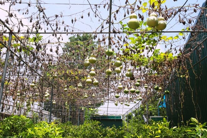 vườn thực vật, khoa nông học, học viện Nông nghiệp Việt nam