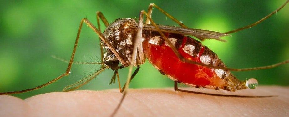 virus Zika, vaccine phòng chống virus Zika