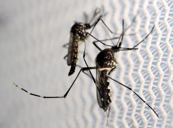 virus, Zika, vaccine, hệ thần kinh
