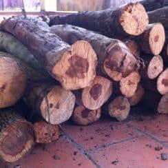 gỗ sưa đỏ, gỗ sưa có tác dụng gì,