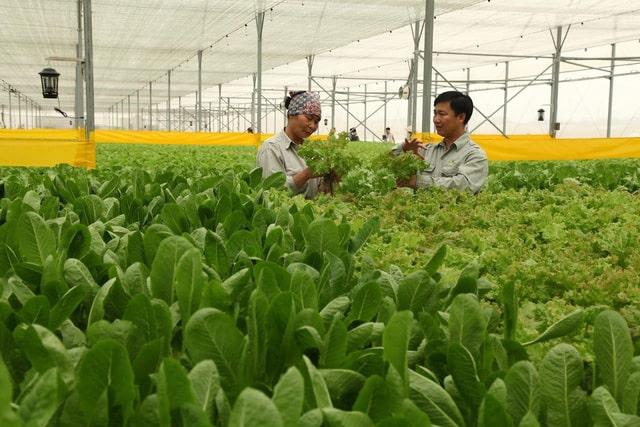 quy trình trồng rau sạch, nông nghiệp công nghệ cao, nông nghiệp hữu cơ