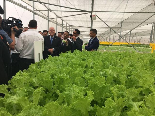 quy trình sản xuất rau sạch, công nghệ của Israel