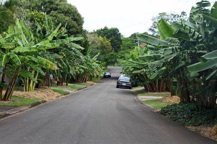 các loại cây ăn trái nhiệt đới được trồng dọc 2 bên đường