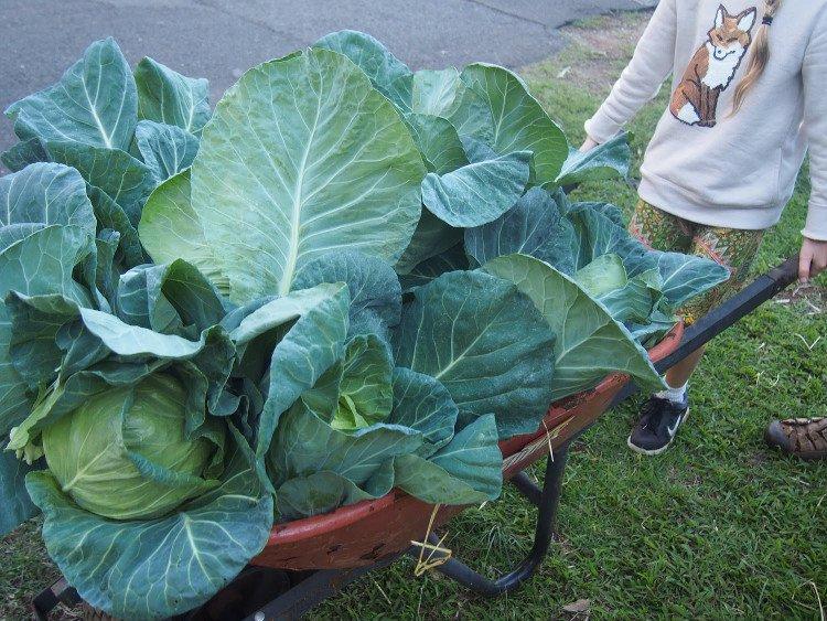 con đường rau củ quả sạch, Urban Food Street, thực phẩm sạch, rau sạch