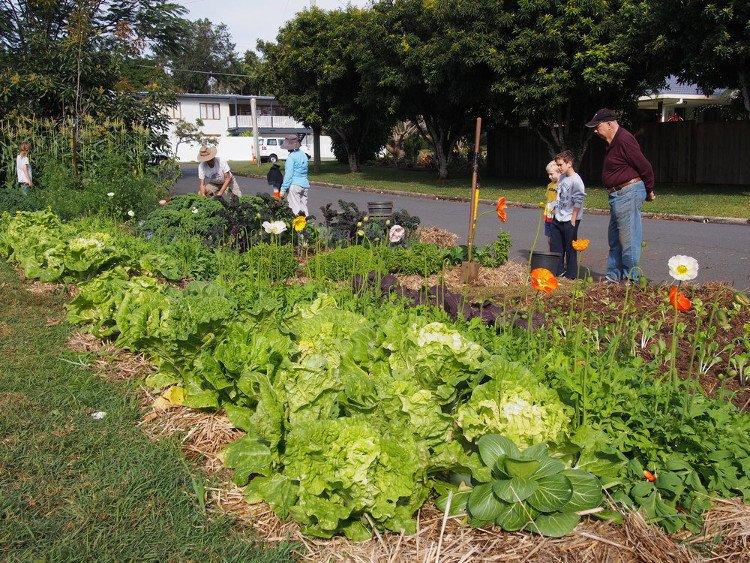 con đường rau củ quả sạch, ai cũng muốn chuyển tới sinh sống, cộng đồng văn minh, thiên nhiên, môi trường xanh