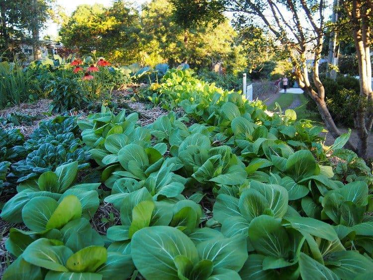 nhiều loại rau và cây ăn quả được trồng, chuối, quất, lựu, thanh long, dâu, dâu rừng, cà chua, cải xoăn