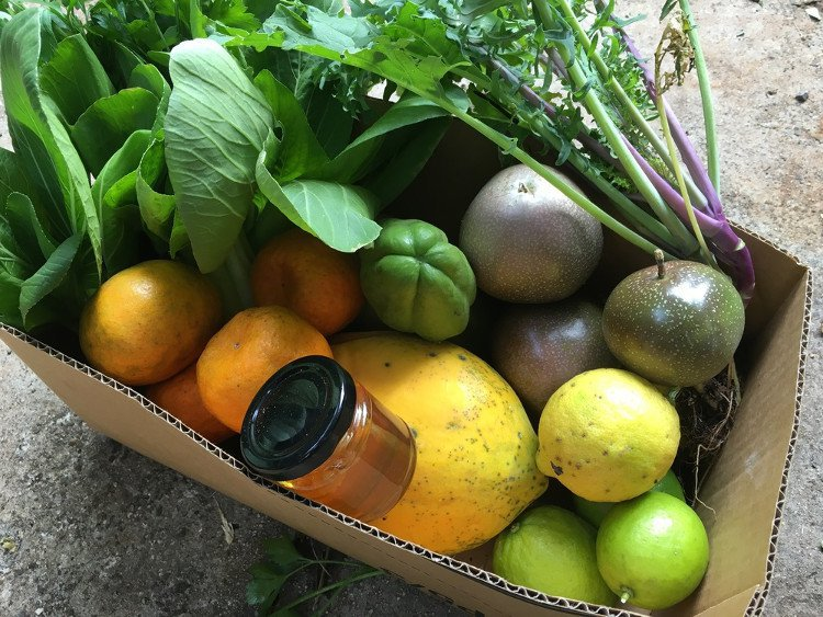 hoa quả giàu dinh dưỡng, sinh tố, trái cây, đu đủ, quả bơ, quả cam, táo
