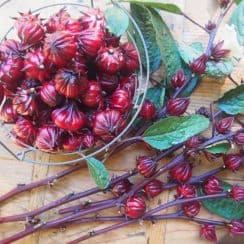 hoa actiso, rau quả sạch