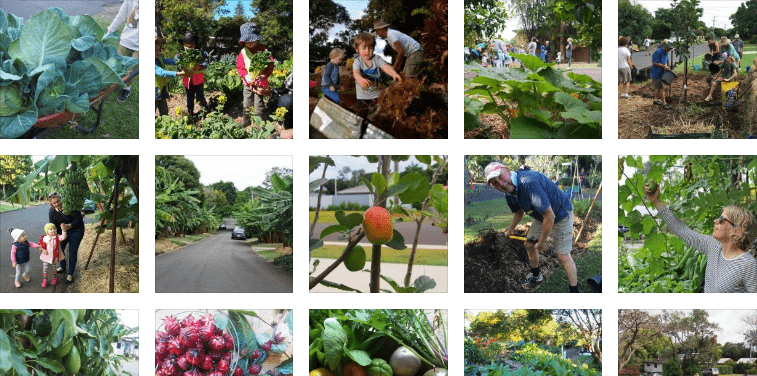 con đường rau củ quả sạch, nước Úc, trồng cây, trồng rau sạch, nông nghiệp hữu cơ, nông nghiệp công nghệ cao, nông nghiệp sạch