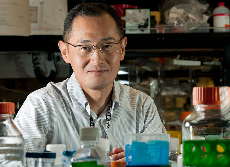 cách mạng tế bào gốc, Shinya Yamanaka, Nobel 2012, iPS