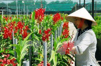 gói tín dụng 100 nghìn tỷ đồng cho nông nghiệp công nghệ cao