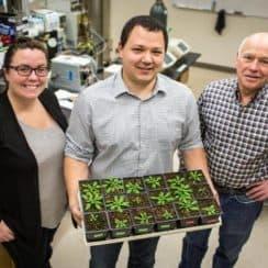 protein mới có thể giúp bảo vệ cây trồng khỏi độc tố, Bile Acid Sodium Symporter 6, BASS6