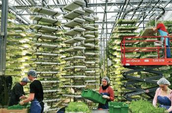 Trồng rau trong những trang trại thẳng đứng tại AeroFarms