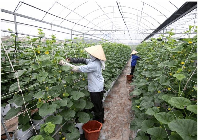 nông nghiệp công nghệ cao ở việt nam