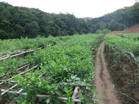 vườn dược liệu quốc gia Yên Tử