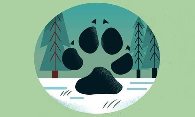 Dấu chân sói xám, dấu chân các loài động vật