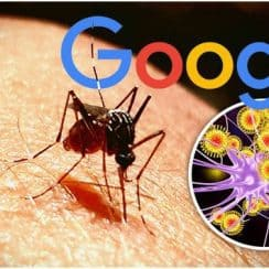 Verily, MosquitoMate, muỗi truyền bệnh, muỗi vô sinh, sốt xuất huyết, Zika, sốt vàng da