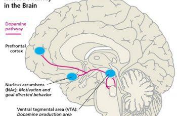 gen đóng vai trò quan trọng gây trầm cảm, bệnh trầm cảm, hội chứng trầm cảm