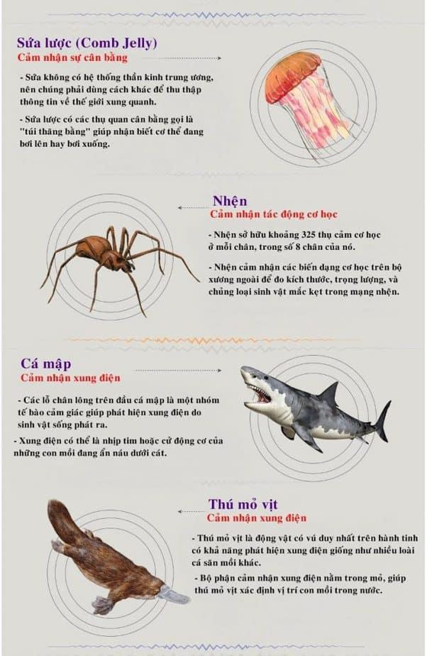 sứa lược, thú mỏ vịt, cá mập, nhện, cảm nhận áp suất khí quyển, cảm nhận cơ học