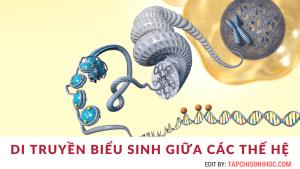 Epigenetic là gì, di truyền biểu sinh là gì, Di truyền ngoại gen là gì, Yếu tố ngoại gen, hệ gen biểu sinh, Thường biến là gì, Đột biến, di truyền học là gì, gen di truyền là gì, nhân tố di truyền là gì, bẩm sinh là gì, biến dị là gì, di truyền học đại cương, kiểu hình là gì, di truyền học người, vật chất di truyền là gì, Gene, gen, Mã di truyền
