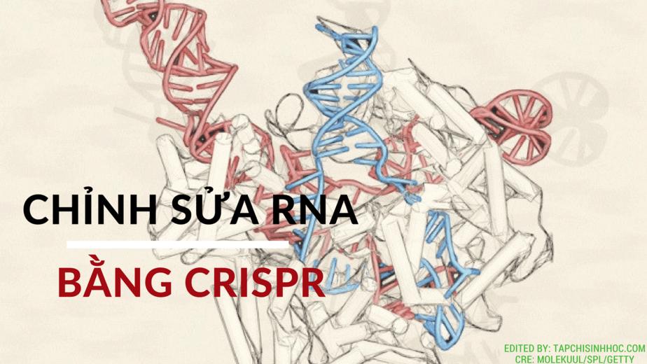 Chỉnh sửa RNA bằng CRISPR CRISPR, Genome editing, DNA, RNA, Genetics, Research, Biological engineering, Broad Institute, McGovern Institute, C2c2