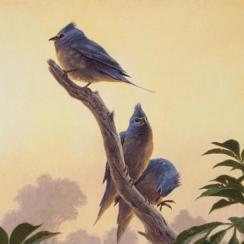 hóa thạch chim cổ, khủng long, tuyệt chủng, tiến hóa