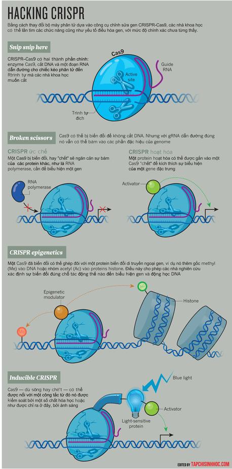 hacking CRISPR, CRISPR-cas9, chỉnh sửa gen, nghiên cứu biểu hiện gen, nghiên cứu hệ gen, cảm ứng ánh sáng