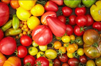 gen điều khiển kích thước của trái cà chua, điều khiển gen, công nghệ gen