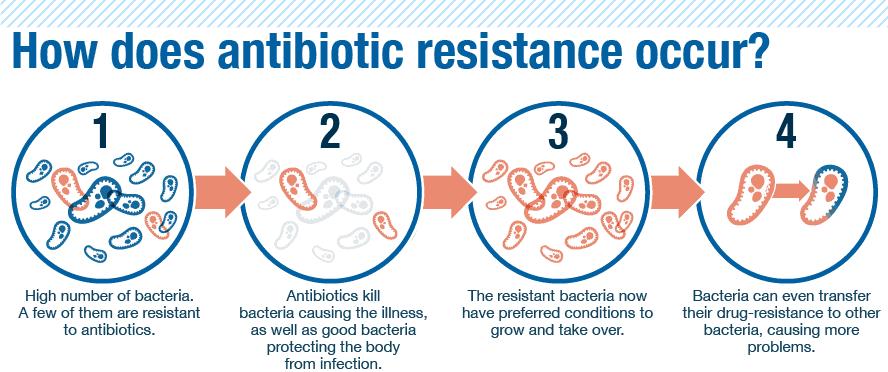 Cách chiến đấu với vi khuẩn siêu kháng thuốc, dịch chiết cây phong, hợp chất phenol, cách tự nhiên, vi khuẩn kháng thuốc, superbug, cơ chế kháng kháng sinh,