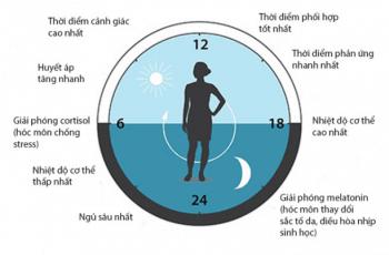 đồng hồ sinh học là gì