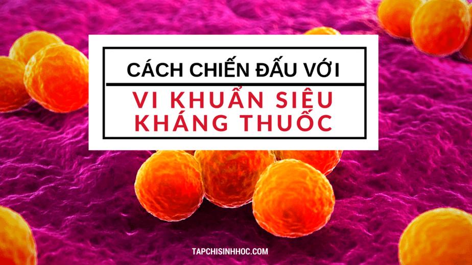 Cách chiến đấu với vi khuẩn siêu kháng thuốc, dịch chiết cây phong, hợp chất phenol, cách tự nhiên, vi khuẩn kháng thuốc, superbug