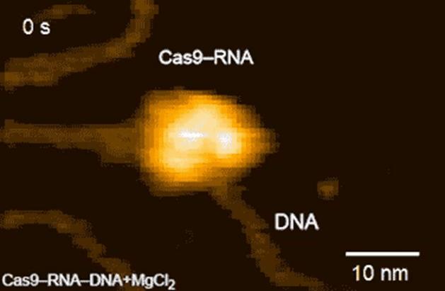 Quan sát hoạt động của hệ thống CRISPR-Cas, kết quả tìm kiếm cho CRISPR