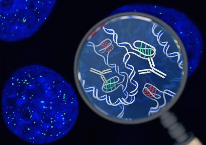 DNA, cấu trúc ADN, cấu trúc 3D của ADN, Mô hình ADN của Watson và Crick, xoắn kép, phát hiện một dạng cấu trúc DNA hoàn toàn mới trong tế bào sống, i - motif, iMab,