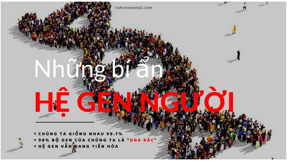Hệ gen, genome, kích cỡ hệ gen người, ADN satellite, telomere, centromere, ADN lặp lại, gen mã hóa, LINE, SINE, Alu, transposon, những bí ẩn của hệ gen người, intron, exon