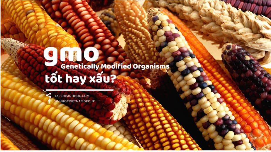 GMO, sinh vật biến đổi gen, thực phẩm biến đổi gen, Sinh vật biến đổi gen (GMO) tốt hay xấu, thực phẩm biến đổi gen lợi hay hại, thực phẩm biến đổi gen có nên ăn, lợi ích của thực phẩm biến đổi gen, có nên ăn thực phẩm biến đổi gen, thực phẩm biến đổi gen tại việt nam, tác hại của thực phẩm biến đổi gen,