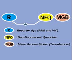 pcr và realtime pcr các vấn đề cơ bản và các áp dụng thường gặp, ứng dụng của real-time pcr, đọc kết quả real time pcr, so sánh pcr và real time pcr, pcr và real time pcr các vấn đề cơ bản, cách đọc kết quả real time pcr, pcr phiên mã ngược, xét nghiệm rt-pcr là gì, real time PCR là gì, PCR định lượng, SYBR green, Taqman probe, molecular beacon, đường chuẩn, RT-PCR,