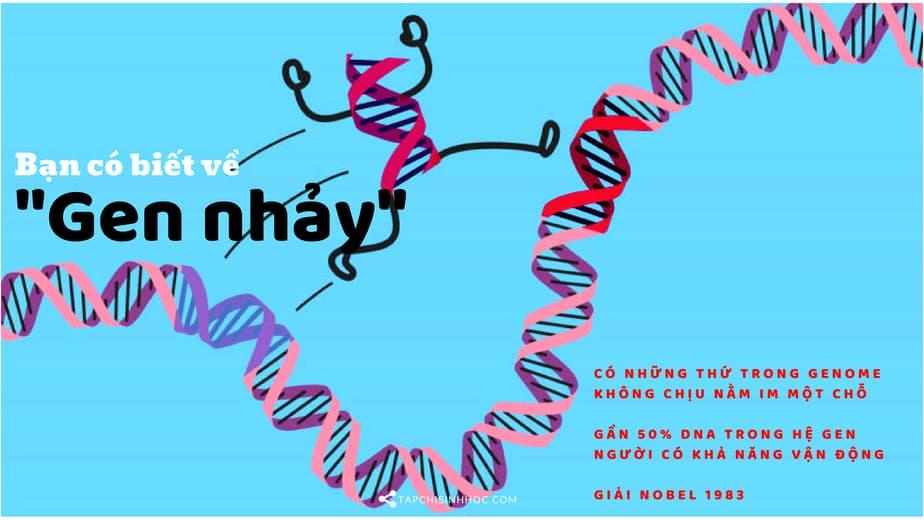 gen nhảy, Gen nhảy là gì, transposon, retrotransposon, LTR retrotransposon, non-LTR retrotransposon, yếu tố di truyền vận động, di truyền ngoại gen, DNA, transposable element,