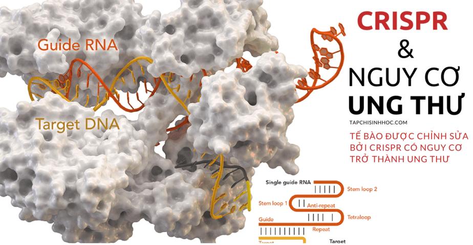 Hệ thống CRISPR-cas9, CRISPR-cas9 là gì, chỉnh sửa gen, chỉnh sửa gen người, CRISPR, Cas9, gRNA, miRNA, CRISPR-Cas9, công cụ chỉnh sửa ADN, Chỉnh sửa gen bằng CRISPR, công nghệ crispr, genome editing là gì, cơ chế crispr/cas9, clustered regularly interspaced short palindromic repeats là gì, theo tác trên ADN bộ gen, tác động lệch đích, Cracking CRISPR, EPIGENETIC CRISPR, di truyền ngoại gen, di truyền biểu sinh, Model CRISPR, CRISPR CODE CRACKING, thăm dò vùng ADN không mã hóa, CRISPR SEE THE LIGHT, cảm ứng ánh sáng Chỉnh sửa RNA bằng CRISPR CRISPR, Genome editing, DNA, RNA, Genetics, Research, Biological engineering, Broad Institute, McGovern Institute, C2c2, CRISPR-C2c2, Chỉnh sửa base DNA, Chỉnh sửa đơn nucleotide, chỉnh sửa base DNA bằng CRISPR, đột biến điểm, chỉnh sửa đột biến điểm bằng crispr, TadA, chỉnh sửa A-T thành G-C, Quan sát hoạt động của CRISPR, hoạt động của CRISPR trong thời gian thực, CRISPR và nguy cơ ung thư,