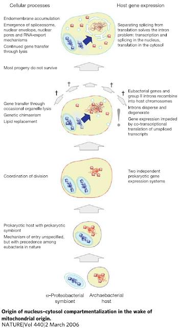 Lược sử tiến hóa hệ gen người, lược sử, tiến hóa, hệ gen, genome, LUCA,
