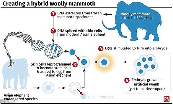 voi ma mút, Đưa voi ma mút từ cõi chết trở về, Công nghệ sinh học, phương pháp DNA editing, CRISPR, iPSC, giải biệt hóa, tử cung nhân tạo, chỉnh sửa gen,