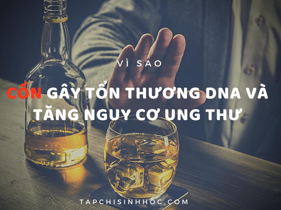 Rượu gây ung thư như thế nào, rượu và ung thư, rượu gây ung thư gan, Rượu tàn phá ADN và gây ung thư như thế nào,Uống bia rượu mỗi ngày làm tăng nguy cơ ung thư,Lý do uống rượu bia tăng nguy cơ ung thư, tế bào ung thư, tế bào gốc, bệnh ung thư, nguyên nhân gây ung thư,  Con đường dẫn đến ung thư của rượu