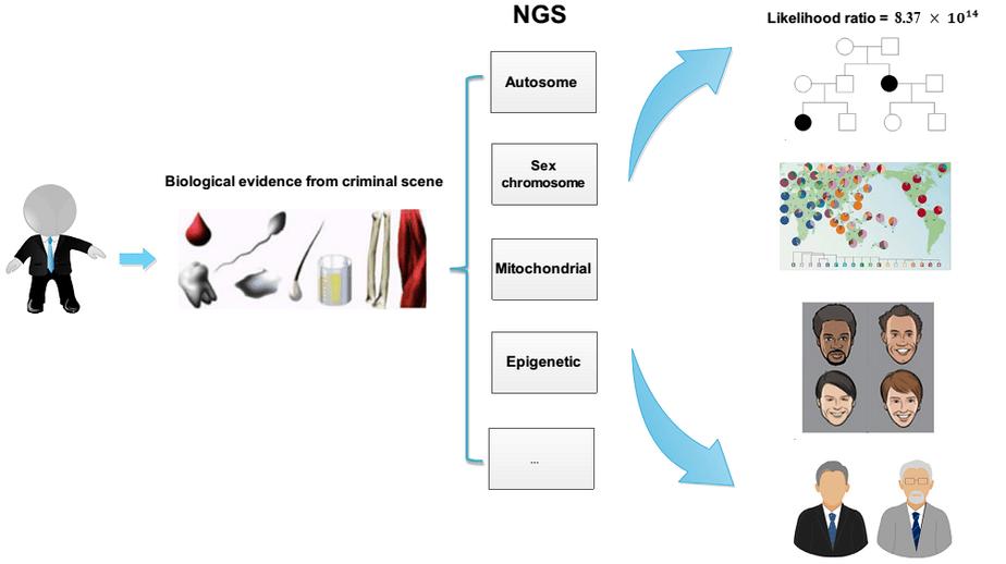 Giải trình tự thế hệ mới trong khoa học hình sự, giải trình tự gen thế hệ mới, giải trình tự gen, giải trình tự sanger, giải trình tự thế hệ, hình sự, khoa học hình sự, pháp y, điều tra, STR, SNP, mtDNA, di truyền ngoại gen, methyl hóa, xét nghiệm huyết thống, NGS, miRNA, ty thể