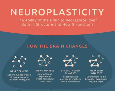 Tính mềm dẻo thần kinh, thần kinh, não bộ, tính mềm dẻo của não bộ, khả năng thích nghi của bộ não, tế bào gốc thần kinh, neuron, tế bào thần kinh có phân chia hay không, neurogenesis, neuroplasticity, synaptic plasticity, tính linh hoạt của não bộ, bộ não tuyệt vời, Alzheimer, thoái hóa thần kinh, phục hồi não bộ, tổn thương não bộ
